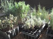 Plantas buscan voluntarios que les planten