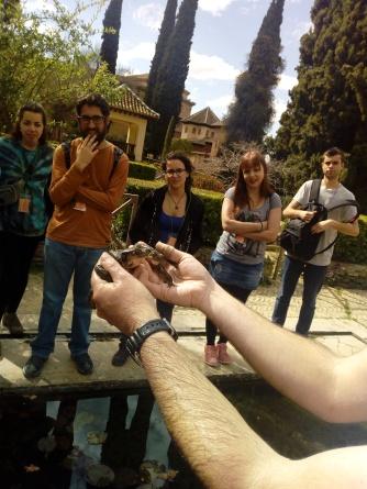 Sapo comun residente en la Alhambra