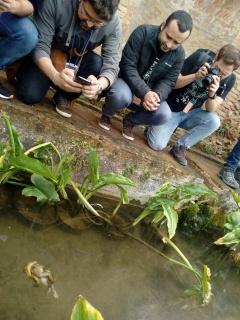 Los voluntarios observando el apareamiento de un número de sapos dificil de concretar