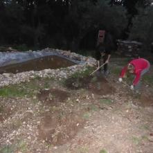 Arreglo alcoques plantaciones del curso pasado