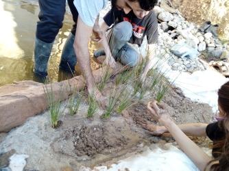 Plantación y listo